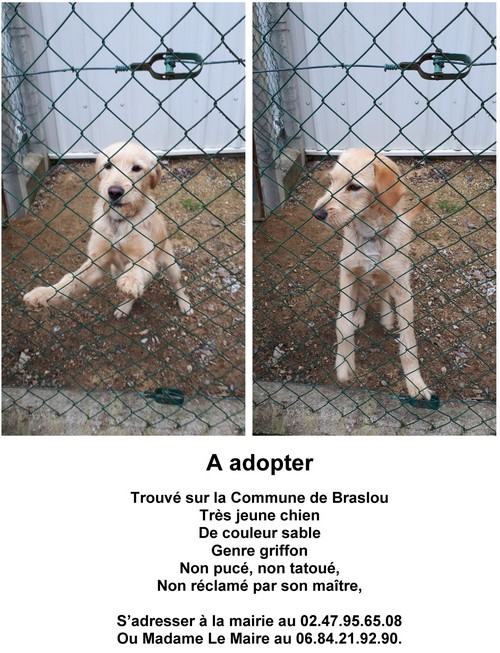 Affiche chien a adopter mairie Braslou05022020 500